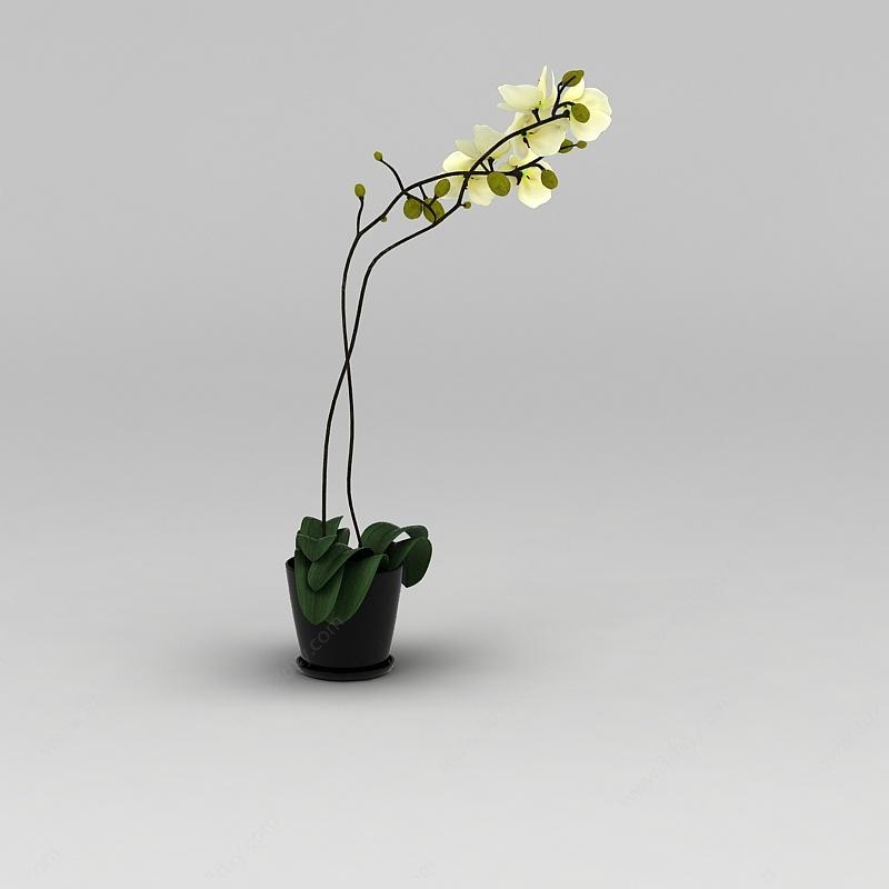 黃色蘭花裝飾花盆