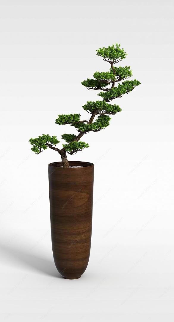 迎客松盆栽花卉3D模型