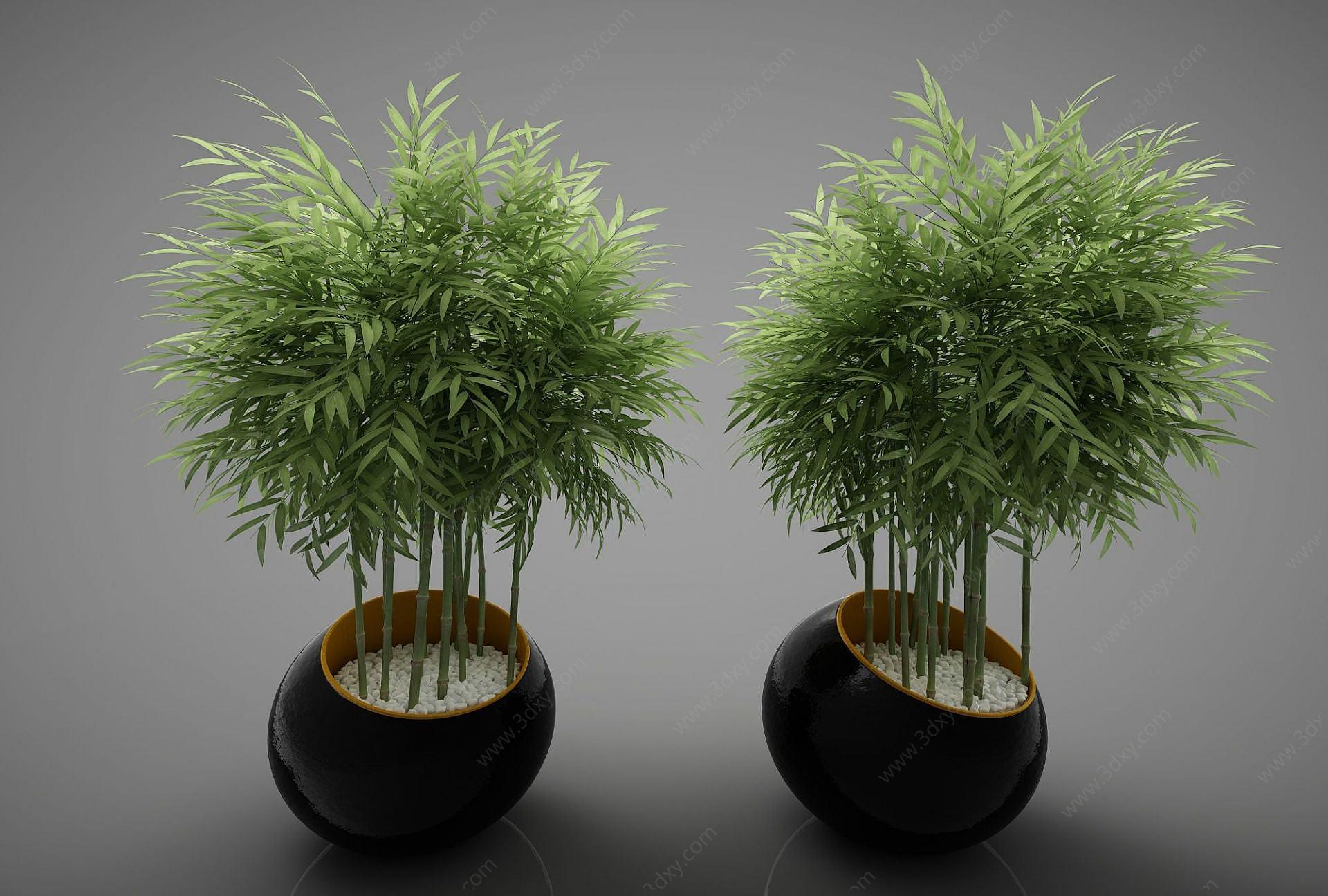 現代風格植物