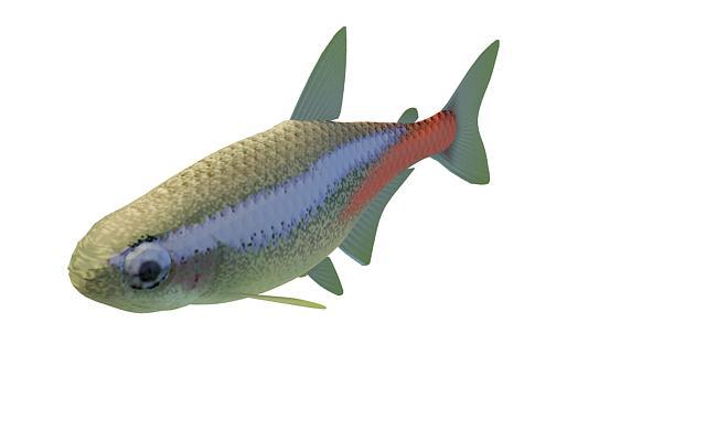 3d模型下载 动物3d模型 水生类3d模型 海鲇鱼3d模型  2000*2000像素的