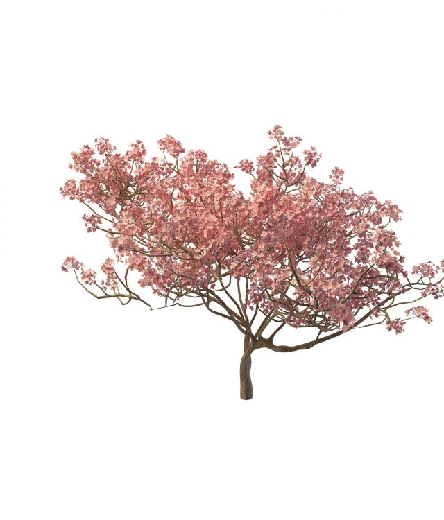 3d樱花树模型_樱花树3d模型下载图片