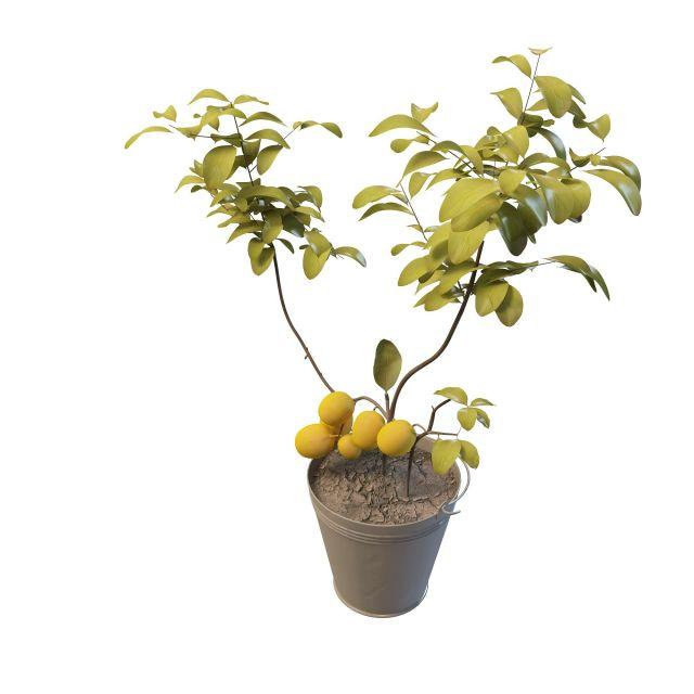3d杏树盆栽模型_杏树盆栽3d模型下载
