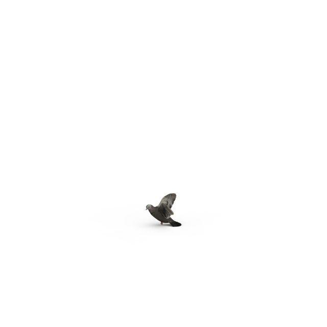 飞行类动物资料
