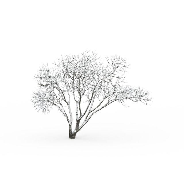 3d冬天多树干树木模型图片