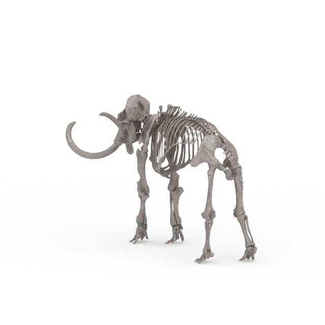 3d模型下载 动物3d模型 其它3d模型 猛犸象骨架3d模型  2000*2000像素