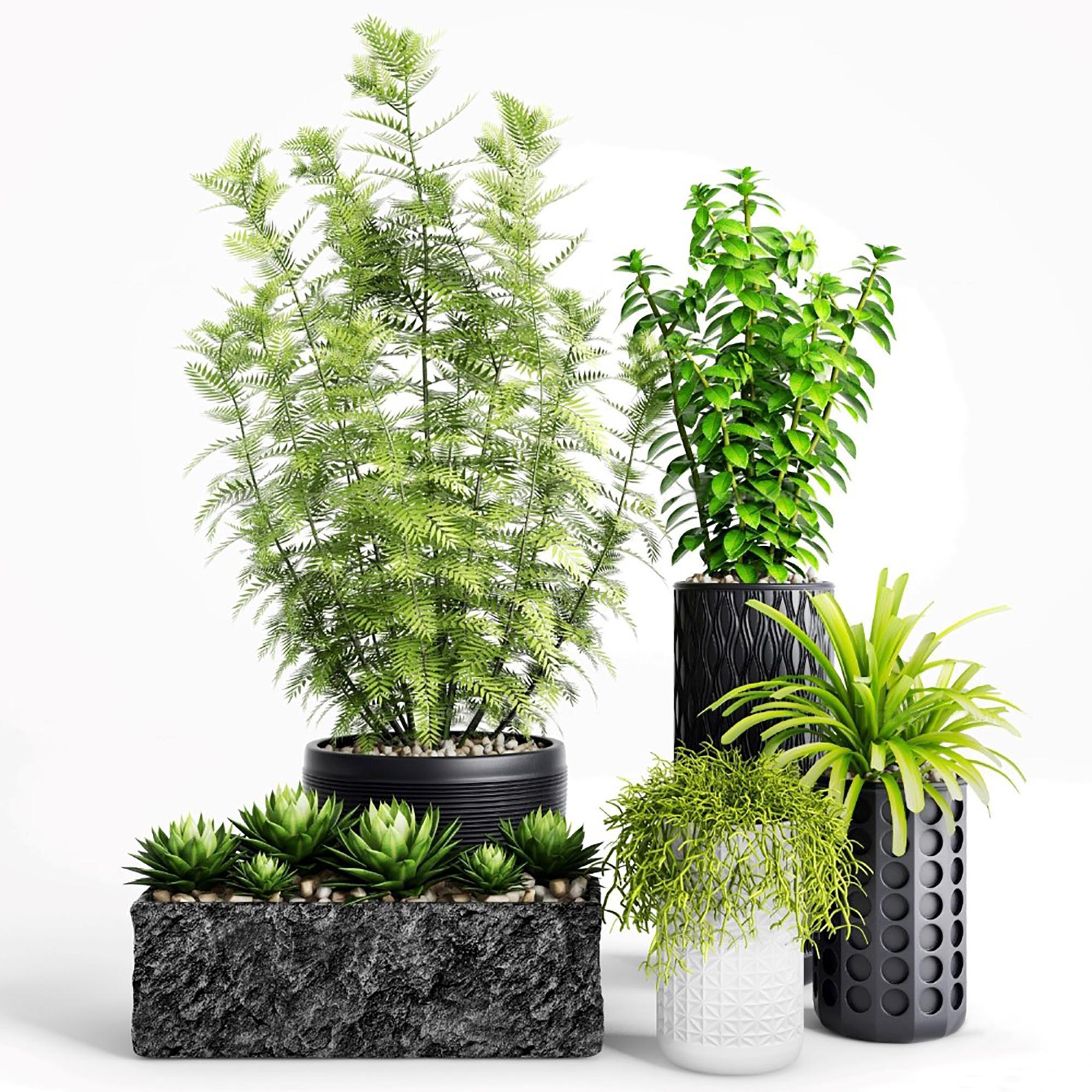 办公室绿植盆栽