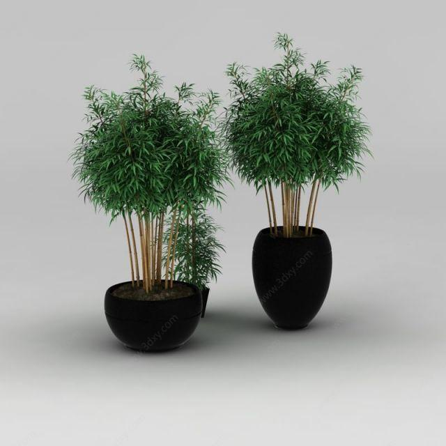竹子分几种_盆栽竹子种类及图片 _排行榜大全