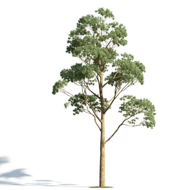 园林手绘树单体