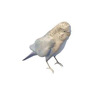 鹦鹉3d模型