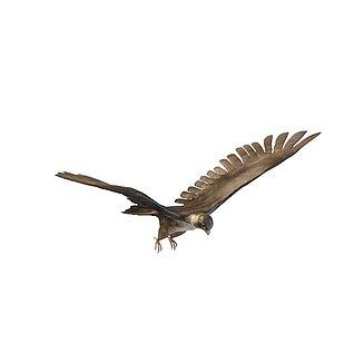 大雕老鹰3d模型