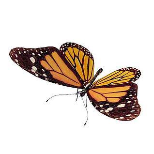 黄色斑点花蝴蝶3d模型