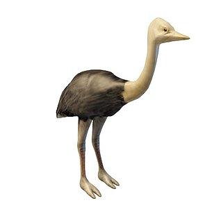 鸵鸟3d模型