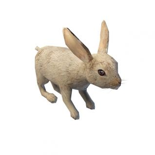 兔子3d模型
