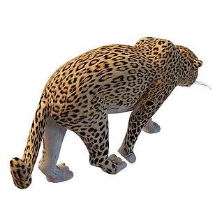 金钱豹3d模型