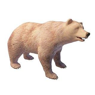 狗熊3d模型