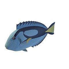 观赏鱼模型3d模型