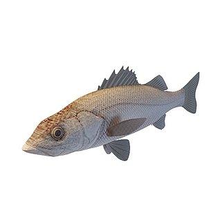 黄立鱼3d模型