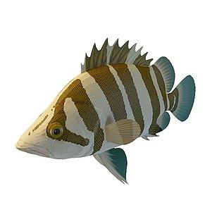 斑马鱼3d模型