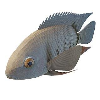 水栖动物3d模型