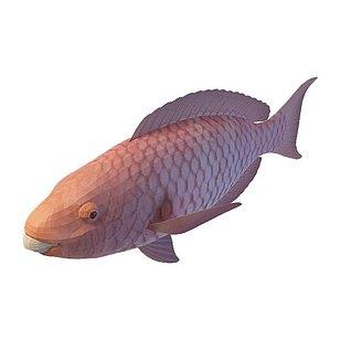 鱼类3d模型