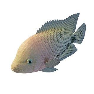 彩鱼3d模型