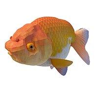 金黄鱼3D模型3d模型