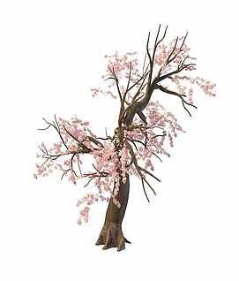3d樱花树模型