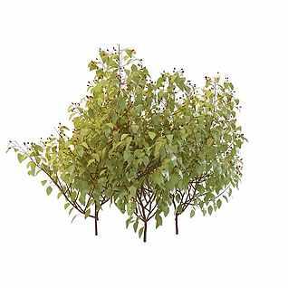 茂盛落叶绿树3d模型