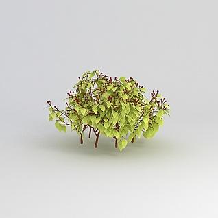 绿叶丛生灌木3d模型