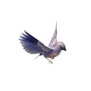 蓝鸟3d模型