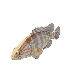 灰斑鱼3d模型