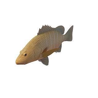 黄鱼3d模型