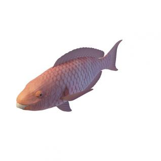 拉氏假鳃鳉3d模型