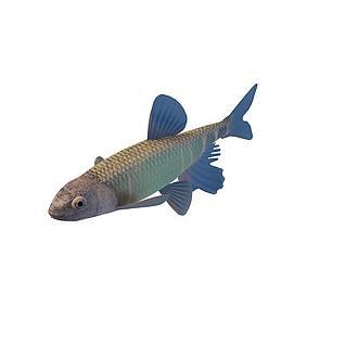 蓝星鱼3d模型
