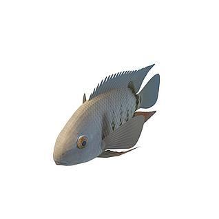 罗非鱼3d模型