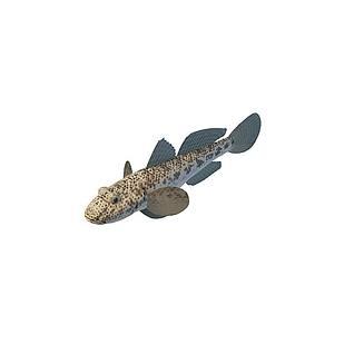墨鱼3d模型