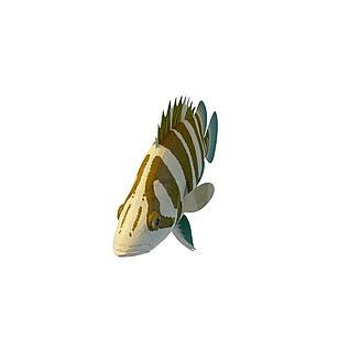 三色龙鱼3d模型
