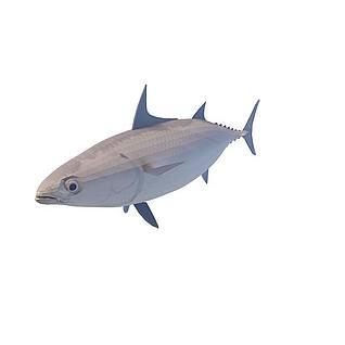 梭子鱼3d模型