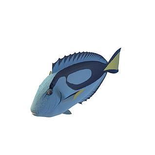荧光鱼3d模型