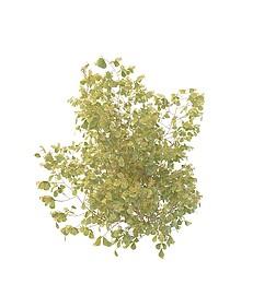 绿色灌木3d模型