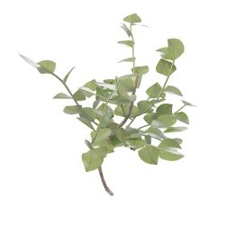 大叶片灌木3d模型