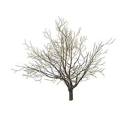 3d枯树模型