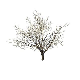 枯树3d模型
