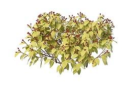 红色果实灌木3d模型