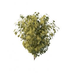 绿叶灌木3d模型