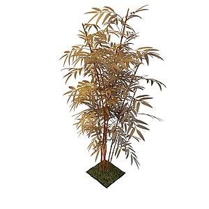 觀賞竹模型