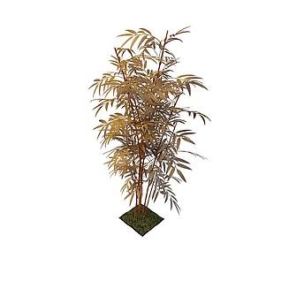 观赏竹3d模型