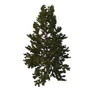 柏树3D模型3d模型