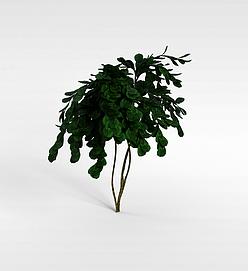3d大叶子灌木模型