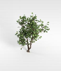 3d绿叶灌木模型